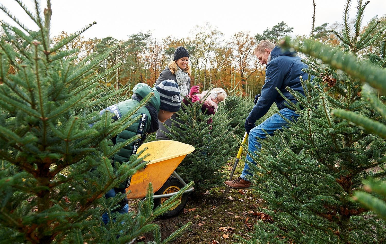 Franken-kerstbomen-zelf-kerstboom